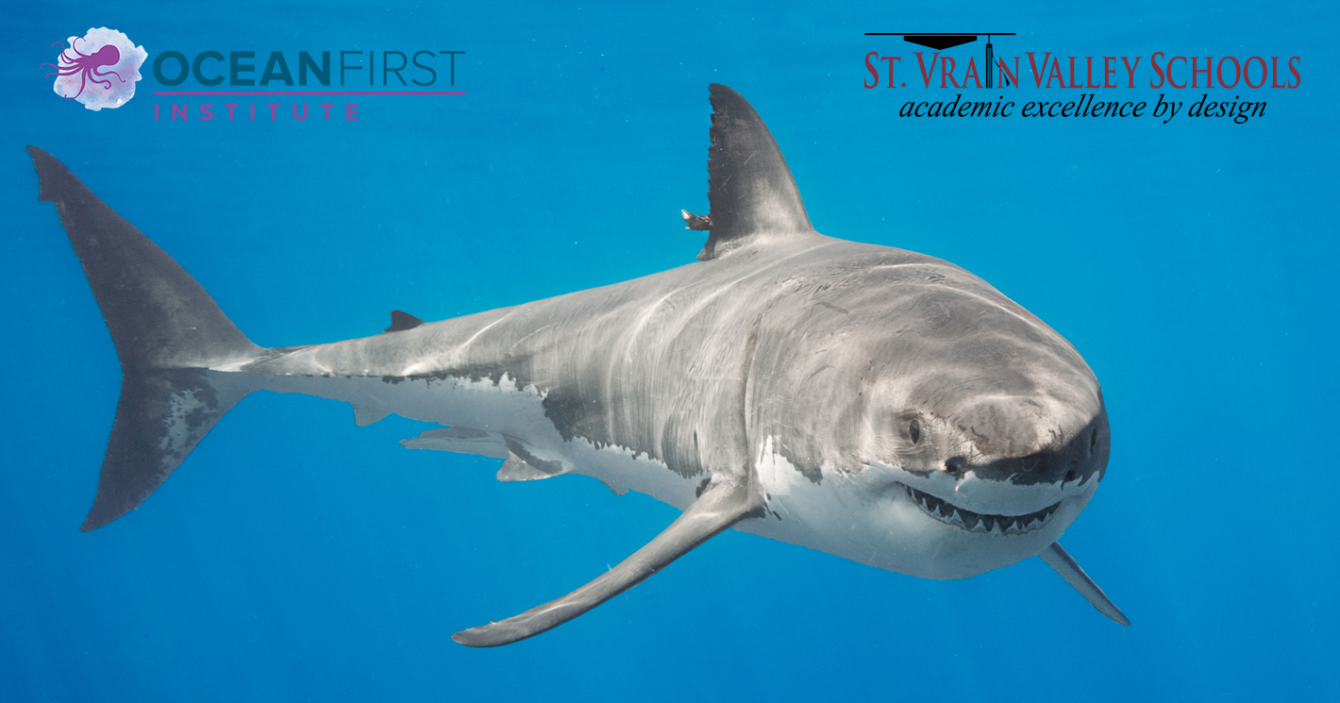 Learning Activities – Ocean First Great White Shark Expedition